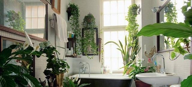 Kwiaty Doniczkowe W łazience Jakie Wybrać łazienki